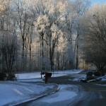 Ice Storm - January 2014